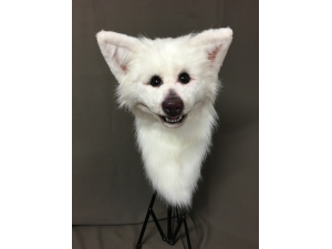 Custom Spitz Breed Dog Head
